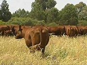 YouTube - Organic Farming - Dealing with worms in livestock organically