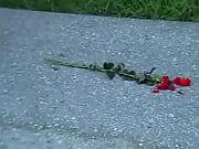 ch crush red rose ot (1,41.