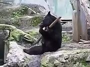 kanfu panda
