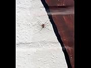 violaci&oacute_n a spiderman