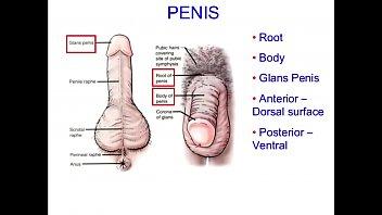 Anus and prostate gland...