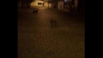 Catioro fudendo na mimha rua