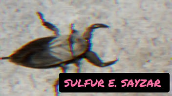 random thoughts of sulfur