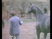 La Perdizione aka Marina&#039_s Animals (1986)