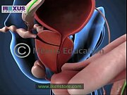 Learn About the Male and female Reproductive Systems - Men for Women  Women for Men