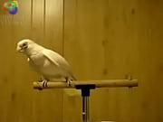 bird loves egyptian music 0001