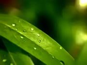 Short video clip-nature