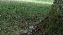 sem calcinha em todo lado em parque.MP4 thumbnail