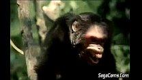 Tarzan 2.FLV thumbnail