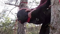 Tied Up To A Tree Outdoor On Sexy Clothes  Wear
