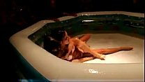 two sexy teens play figh in an oiled pool