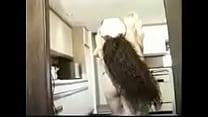 Beautiful Busty Knockouts - 2 pornhub video