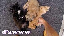 XXX PAWN - Things Get Weird When Valerie White ... Thumbnail