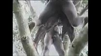 Hot Nasty Raw Hard African Jungle Fucking!! thumbnail