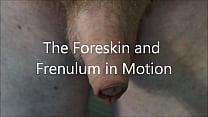 Foreskin Demonstration
