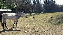 Fiquei toda molhada ao ver o tamanho do membro de um cavalo !!! Queria que meu namorado fosse assim !!! Paty Bumbum, El Toro De Oro صورة