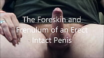 My Erect Penis Demonstration