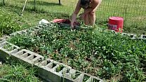 Garden PAWG pulling weeds in the strawberry patch has a big ass: hotsquirtcouple صورة