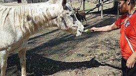 Fiquei toda molhada ao ver o tamanho do membro de um cavalo !!! Queria que meu namorado fosse assim !!! Paty Bumbum, El Toro De Oro