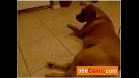free webcam chatWebcam Masturbation Free Amateur Porn Video dc