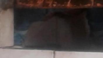Chola orinando jauja huancayo