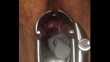 Artificial Insemination Putting Cum in Cervix