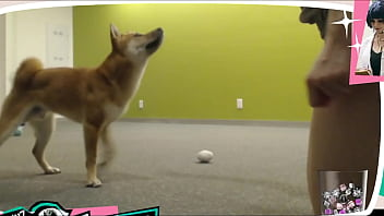 Boobs wobbling - Braless twitch streamer plays with doggo