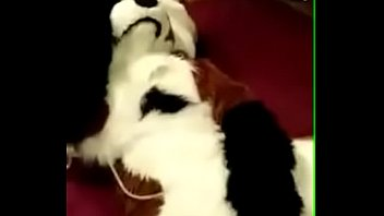 Yiff fursuit porn Hot girl in fox fursuit fucks herself with dildo