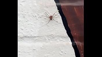Violación a spiderman