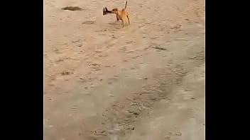 Correntina tetona se desnuda en la playa. parte 2