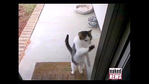 Смешные кошки видео сборник