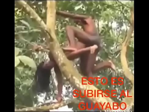 download segera bokep Como Cuando Te Montas En El Guayabo Jaja full hd